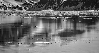 ART_1197-Bird Reflections