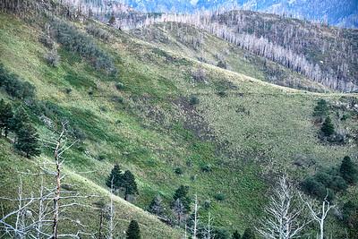 NEA_0022-Crest Trail