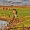 SRI_2597-7x5-Bird