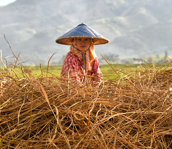 MYA_4305-Working the rice field