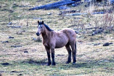 NEA_0980-Wild Horse