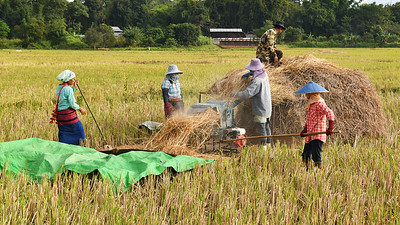 MYA_4254-Working the Rice