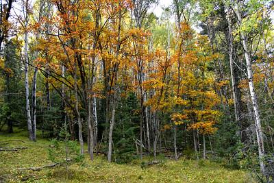 NEA_0595-Fall Color