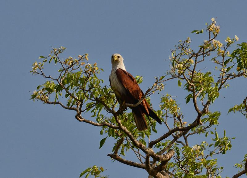 SRY_0473-Eagle