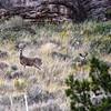 NEA_3017-7x5-Deer