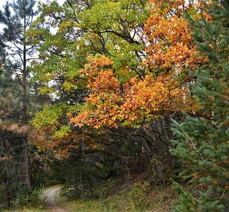 NEA_0594-Fall Trail