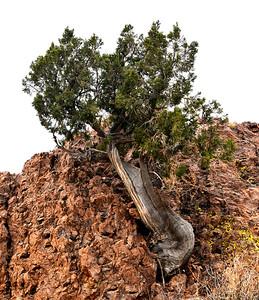 NEA_2980-Tree