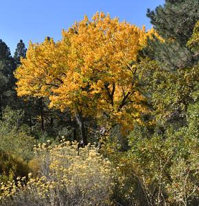 NEA_0880-Fall Color