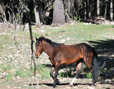 NEA_4176-Wild Horse