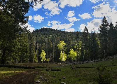 NEA_4293-1000 Mile Canyon