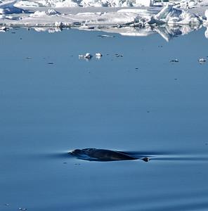 ART_1577-Minky Whale