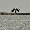 NEA_4932-7x5-Pelican dive