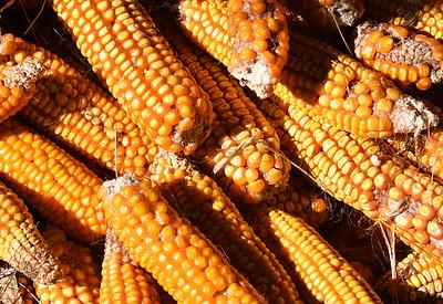 CHI_4358-Corn