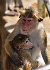 SRI_2109-5x7-Monkey-Mom-Baby