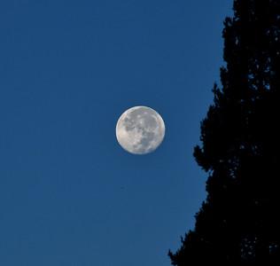 NEA_0591-Moon