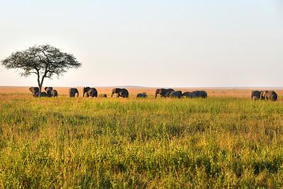 NEA_3853-Elephants