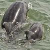 NEA_4967-7x5-Dolphin-Baby