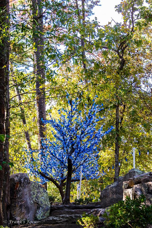 November 5, 2016 -- Blue Tree
