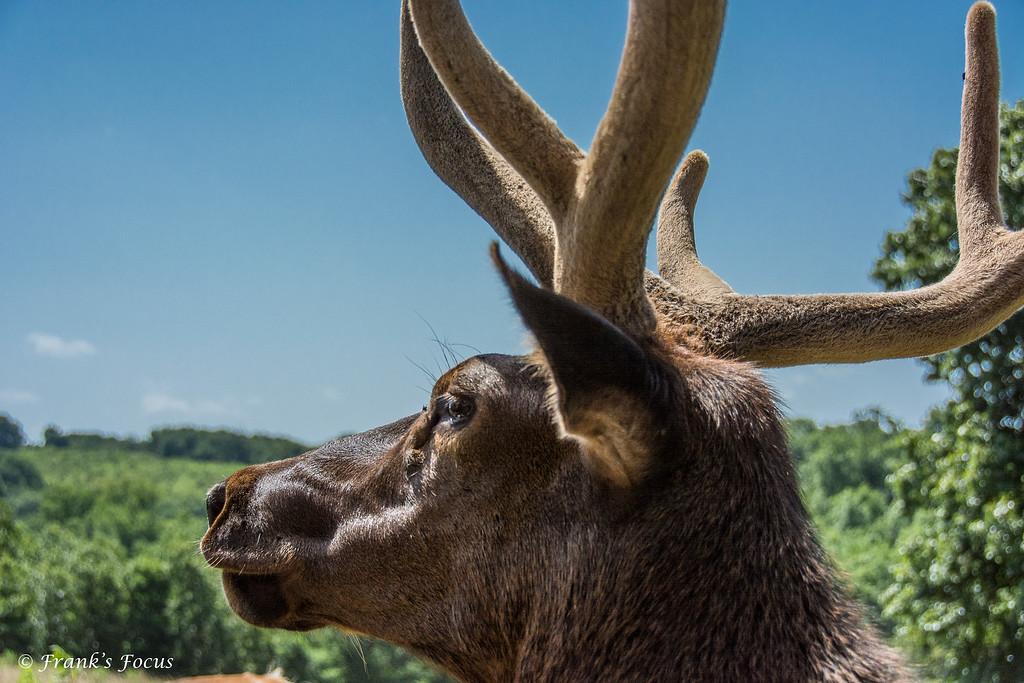 December 28, 2016 -- Bull Elk