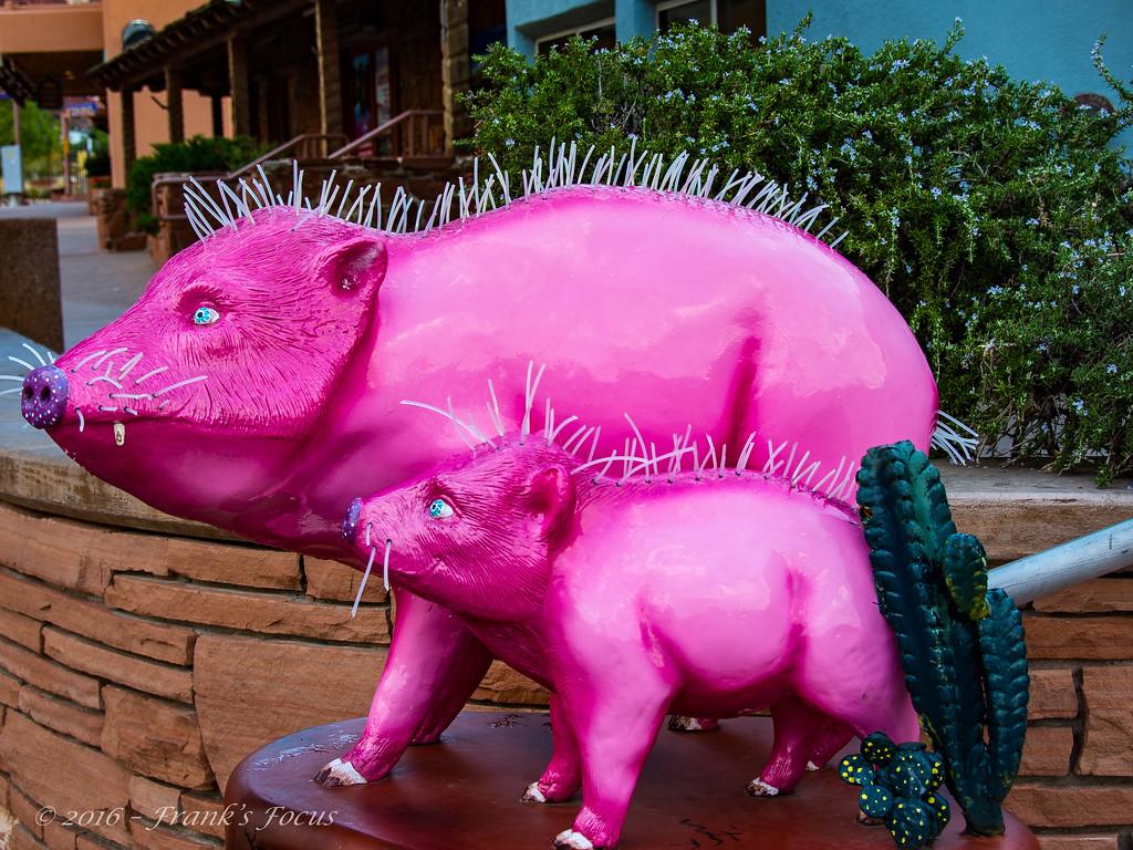August 25, 2016 - Pink Javelina