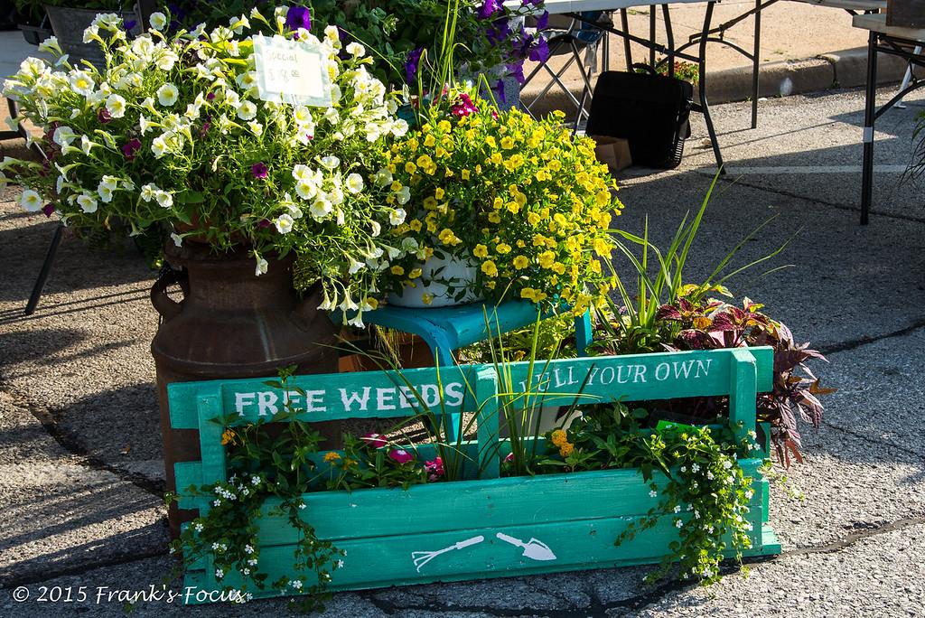 Friday, June 19, 2015 -- Spontaneous Vegetation