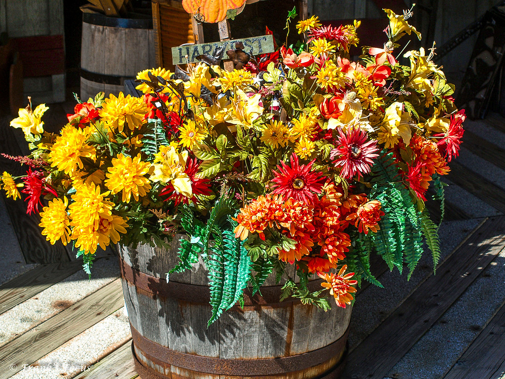 December 12, 2016 -- Flowers by the Barrel