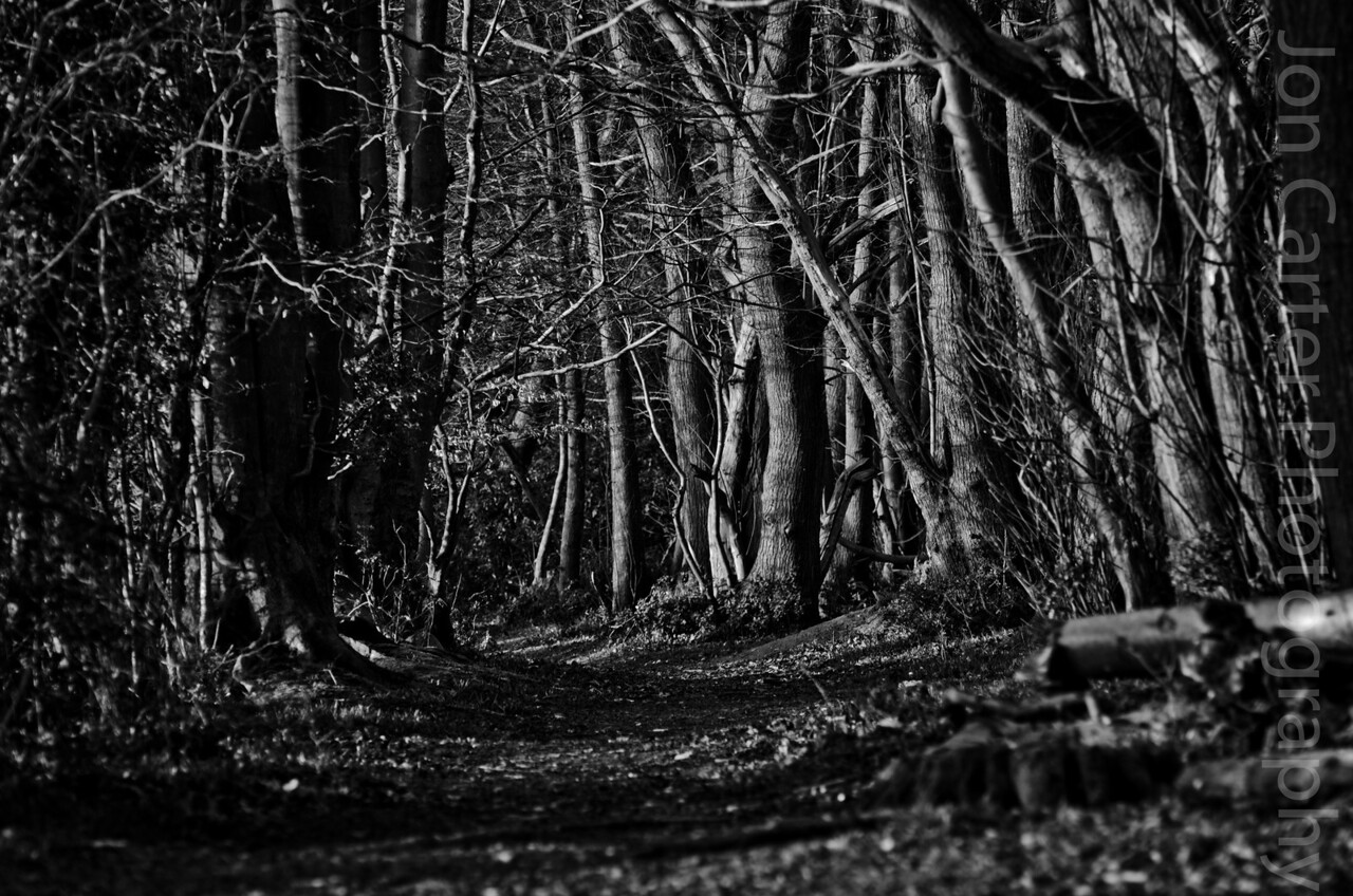 March 24 - Deserted Lonely Path  This is a photo to sum up how I'm feeling. Took a cycle ride today and discovered a whole new area of woodland that just seemed deserted.