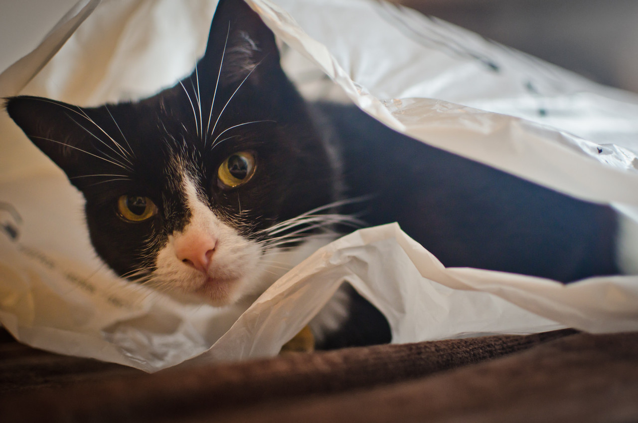 October 6 - Cat in a bag!  With the evenings getting darker, and my best photos now having to come at the weekend, unfortunately this was a photo too good to miss. Millie decided to find herself a nice plastic bag to sit in and peer out of.
