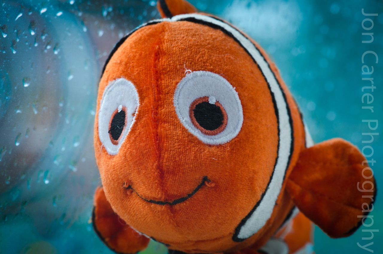April 9 - On a wet and miserable day...  Took this photo of a toy nemo. I put it next to the window and a reflector disk next to it to get the sunlight on both sides.