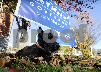 Bailey, an English schnauzer sits pensively underneath a sign for Sue Minter.
