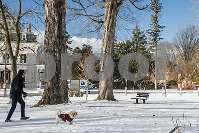 Robert Layman / Staff Photo  A dog walker braves the gusty winds along with their sweatered pooch on the snow covered Fair Haven town green Friday morning.