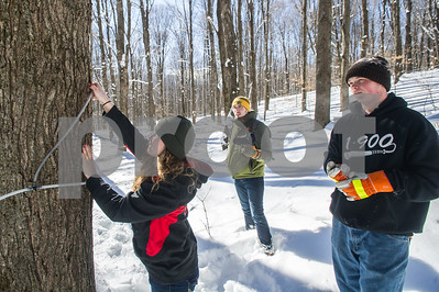 Robert Layman / Staff Photo Samantha Manley, left, and classmate John Whittemore, right, pull taps out of the sugarbush at the Smokey House Center Friday morning.  The pair, along with their instructor Tom Carroll, center, were out clearning lines before the new holes are tapped.