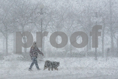 Robert Layman / Staff Photo A woman walks her dog across the street during Tuesday's blizzard.