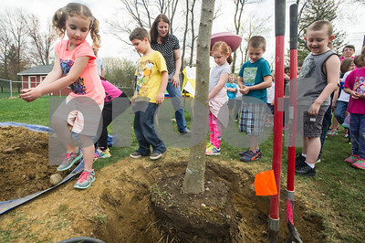 Robert Layman / Staff Photo Leah Hall, left, kindergartener at Northeast Elementary School in Rutland, prepares to throw a handful of soil around the roots of the Class of 2029 tree Friday afternoon. Students from four classes gathered before recess to plant the honey locust  in celebration of National Arbor Day.
