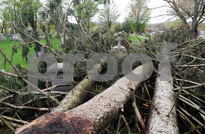 Robert Layman / Staff Photo  Friday night's windstorm left damage in a multiple places around the city. Seen here, three trees sit at rest in the St. Joseph Cemetery in Rutland Monday morning.
