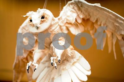 Robert Layman / Staff Photo  Snowy Owl 3D, Isobel Nimtz