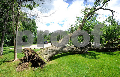 Robert Layman / Staff Photo A fallen tree at the Rotary Park in Rutland was the victim of Monday night's thunderstorm.