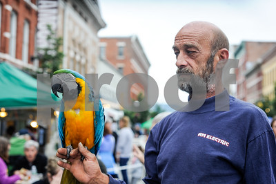 """Robert Layman / Staff Photo Brian Kirk holds his macaw bird Savannah at the Friday Night Live event in downtown Rutland. Kirk said Savannah, who's now 22, will live to be almost 80. """"My son will have to finish the journey,"""" he said."""