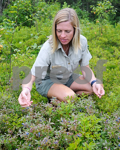 Robert Layman / Staff Photo Knox searches for the perfect blueberry.