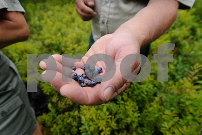 Robert Layman / Staff Photo Burbank holds out a handful of blueberries.