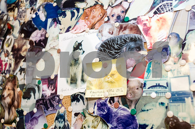 Robert Layman / Staff Photo Cats, hedgehogs, raptors, dogs, pigs and more are remembered on the patient photo board at the vet's office with photos provided by their owners.