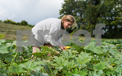 Robert Layman / Staff Photo It's harvest day for the Foggy Meadow Farm in Benson, and seen here Janie Locker is on the lookout for the perfect summer squash. After she finds them, she'll bring them and other bounty the folks at the Fair Haven Farmers Market Thursday afternoon.