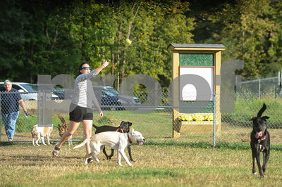 Robert Layman / Staff Photo A woman tosses a ball as lab dashes off to go retrieve it.