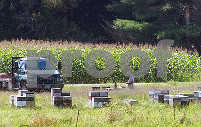 Robert Layman / Staff Photo A bee keeper tends to the busy hives Friday afternoon in Hampton, NY.