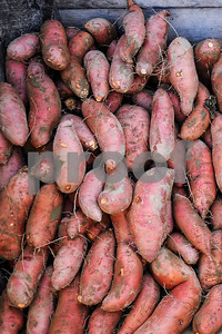 Robert Layman / Staff Photo Sweet potatoes have delicate skin, and must be stacked neatly -- every single one.