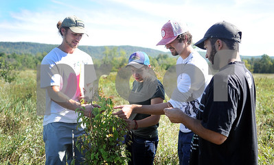 Robert Layman / Staff Photo  Friday, September 22 marked the fall equinox, and before the leaves fall off the trees, they need to be identified for their conservation effot. Seen here, Dylan O'Leary, left, Field Assistant for the Vermont chapter of the Nature Conservancy, helps a group of Green Mountain College seniors identify an arrowwood viburnum, which was among one of the 60,000 various trees planted at the Hubbardton River Clayplain Forest site in Benson Friday, September 22, 2017. From the center right is: Bailey Aaron, Cameron Book, and Lucas Krauss. Aarrowwood trees were once used by indigenous cultures to craft arrows due to their straight, dense limbs.