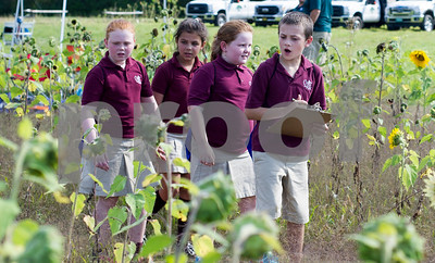 Robert Layman / Staff Photo  Christ the King students walk through a maze of sunflowers at the fields behind the Rutland Regional Medical Center Wednesday afternoon.