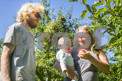 Robert Layman / Staff Photo Jon Charles, looks as his wife Brittany offers an Ira Red apple to their daughter Amelia at Mendon Orchards, their family business, Thursday, October 13, 2017.