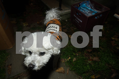 Robert Layman / Staff Photo Wally guards the candy stash while his owners Bob and Regeen Wilbur hand the rest of it out during Halloween Tuesday night in Rutland.