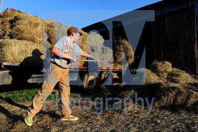 Jeb Wallace-Brodeur / Staff Photo Connor Bombard, 14, pitches some hay Wednesday night from a recent cutting at his family's farm in Duxbury.